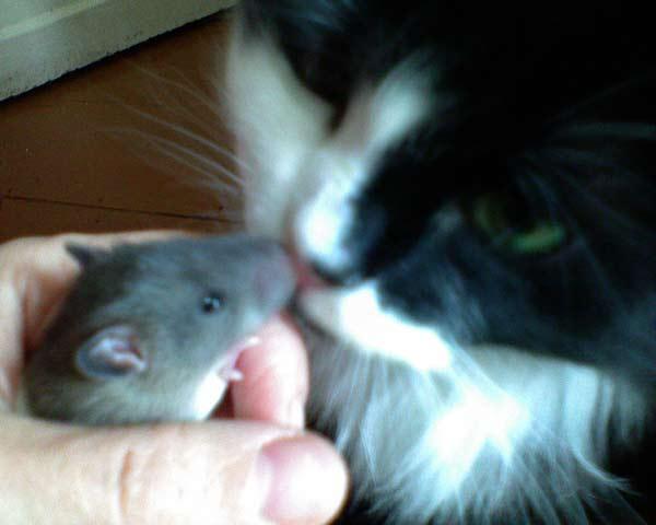 Крысята 2