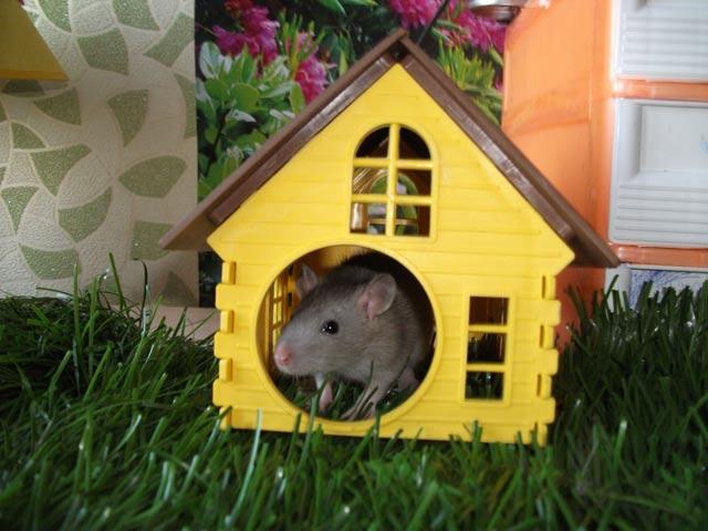 Домик для крыс своими руками фото