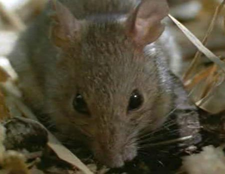 Крыс в одной квартире (14 фото) - Бугага