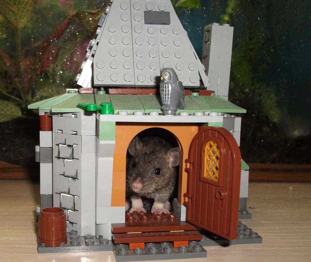 Домик для мыши своими руками 92
